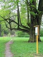 naucny-chodnik-budatinsky-park.jpg